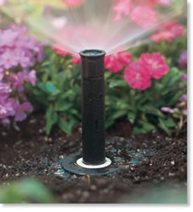 Pop - Up Sprinkler Head