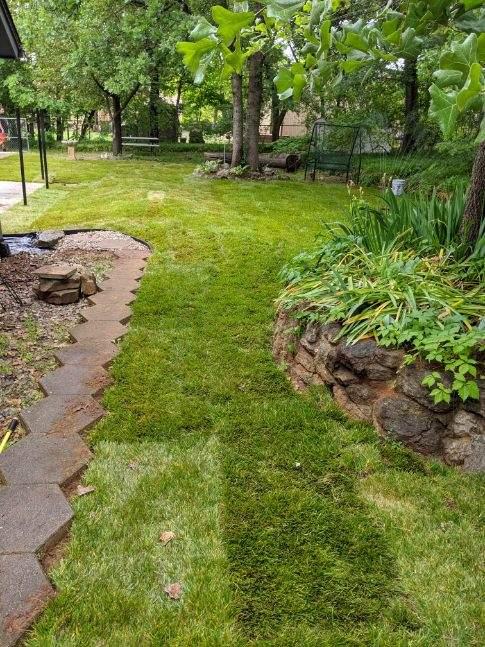 new back yard sod