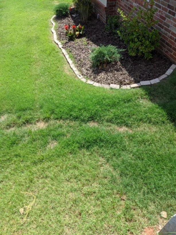 grass growing over french drain